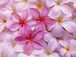 گل ... تقدیم به تو ...