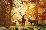 طبیعت